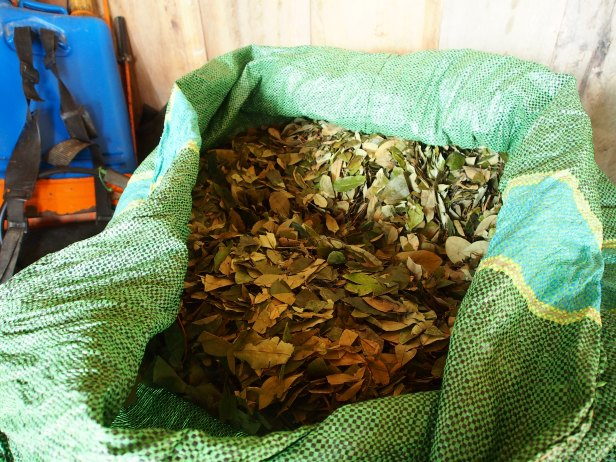 A bag of dried coca leaf, Chapare, Bolivia. Photo by Thomas Grisaffi.
